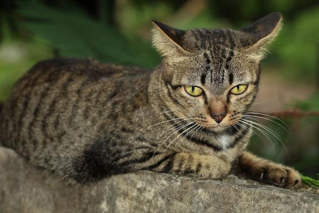 灰色の猫のクローズアップがストーンウォールで眠っています。