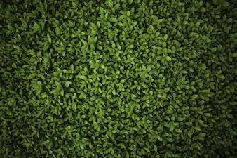Close-up of green bush