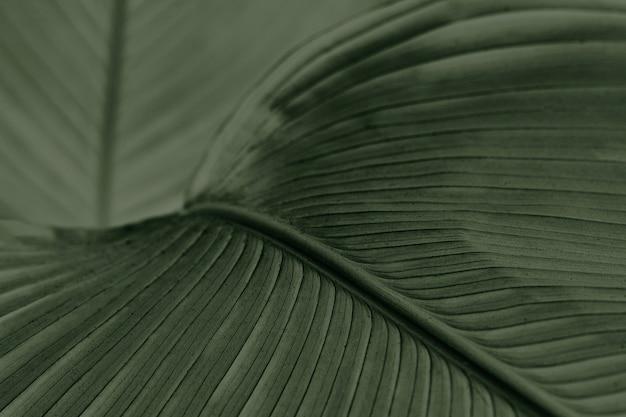 緑のシガーの花の葉のクローズアップ