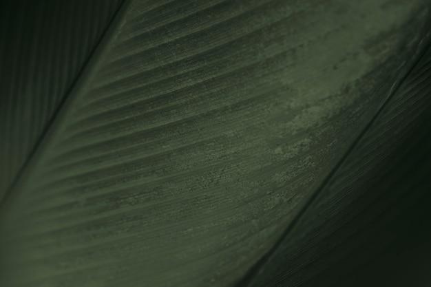 Закройте вверх зеленых листьев цветка сигары