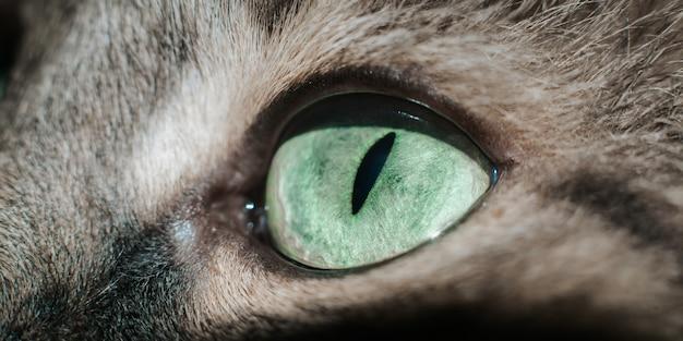 Крупный план зеленого глаза кошки, смотрящей в камеру, макросъемка животного. выразительный вид сбоку кошачий глаз, выборочный фокус