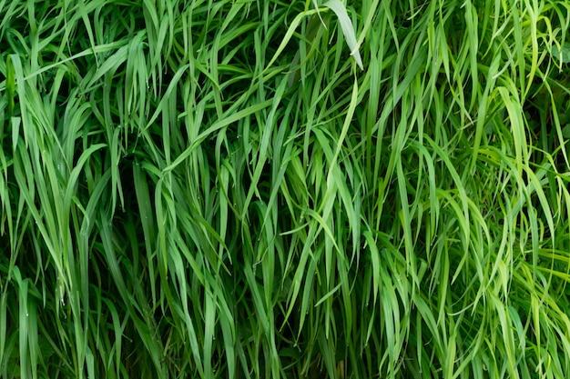 푸른 잔디 배경 무성한 식물 벽의 클로즈업
