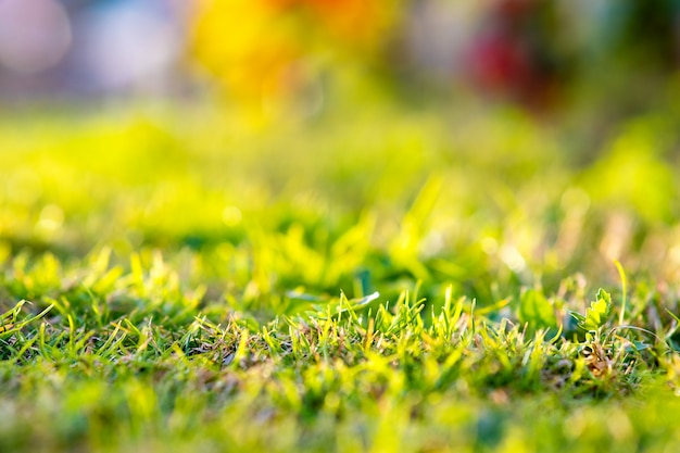 緑の芝生の活気に満ちたカラフルな背景を持つ芝生のクローズアップ。