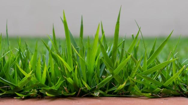 배경이 흐릿한 푸른 잔디 클로즈업