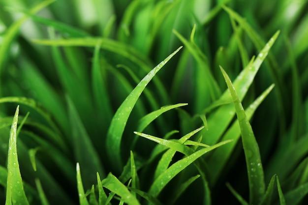 Зеленый цвет травы близкий вверх