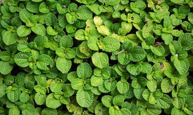 Крупным планом зеленые листья и растения были в природе