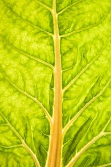 緑の葉の茎の拡大図
