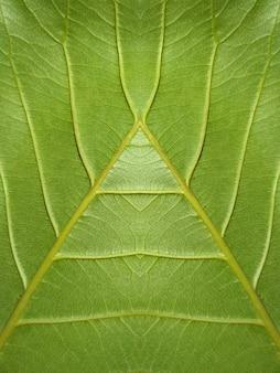 녹색 잎 질감 배경의 클로즈업