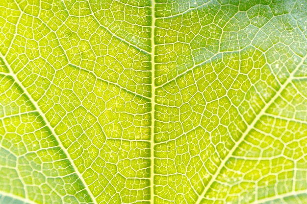 緑の葉のクローズアップ