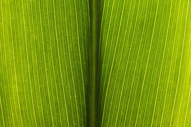 Крупный план зеленого листа
