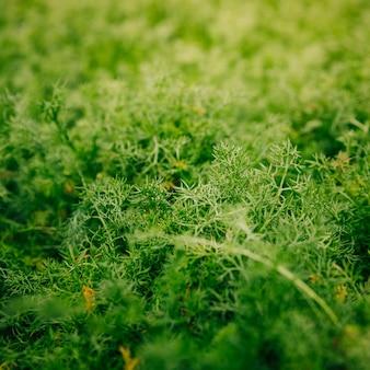 Крупный план зеленых листьев фоном в саду