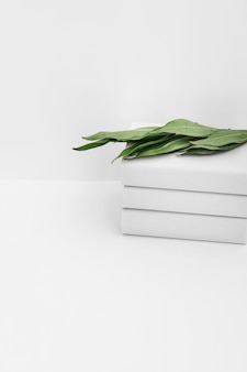 Close-up of green leaves on stack of books against white background