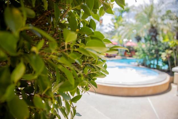 ぼやけた晴れた日のプールの背景に緑の葉のクローズアップ。