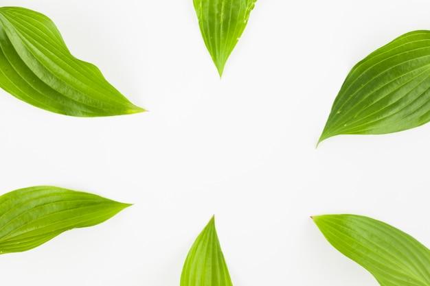 白い背景に緑の葉のクローズアップ