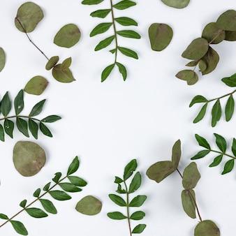 Крупный план зеленых листьев на белой поверхности