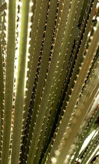 스파이크와 녹색 잎의 클로즈업