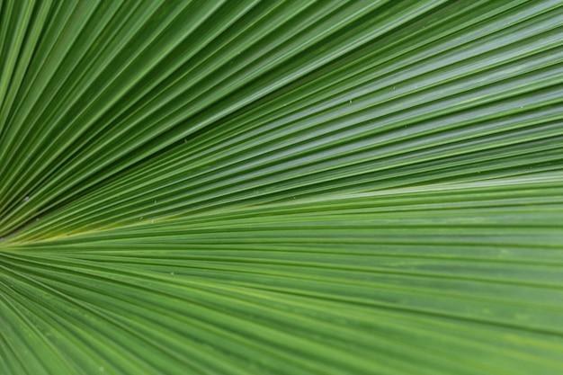 Крупным планом зеленых пальмовых листьев