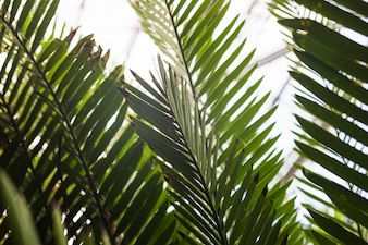 Close-up of green palm leaves