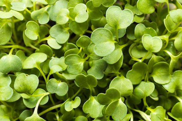 Крупный план зеленого растения