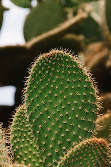 Close-up of green prickly cactus