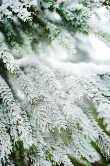 Крупный план зеленых заснеженных замороженных еловых ветвей красивой большой ели, растущей в лесу. рождество и новый год и концепция зимнего пейзажа