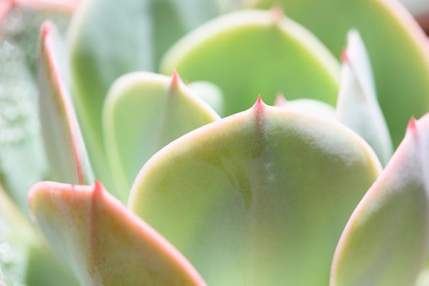 녹색 즙이 많은 식물의 근접 촬영