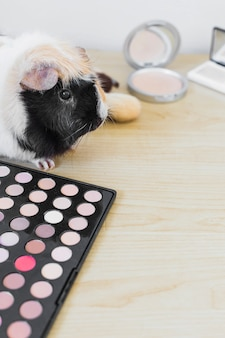 Close-up of guinea with eye shadow palette and blusher on wooden background