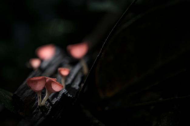 トロピカルフォレストの木の樹皮に生えた髪の毛の赤いオレンジのキノコのクローズアップ