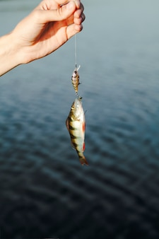 Close-up of hand holding fishing bait with caught fish against lake