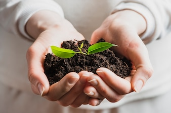 Close-up of hand holding seedling with soil