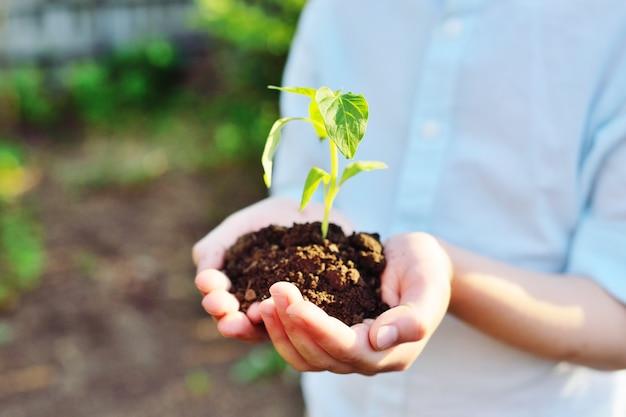 Крупный план рук, держащих горсть земли с молодой рассадой зеленого растения.