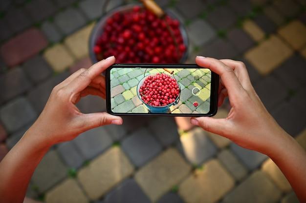 携帯電話を持って、青い金属製のバケツで桜の収穫の水平方向の写真を撮る手のクローズアップ