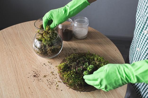 Крупным планом руки в перчатках насыпают флорариум мхом.