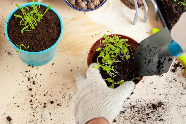 新しいポットに植物を移植する手のクローズアップ