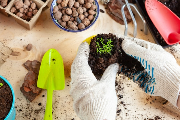 식물을 새 냄비에 이식하는 손 클로즈업