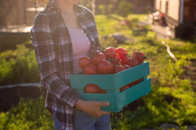 勤勉な女性の庭師のクローズアップは、晴れた夏の日にトマトの収穫箱を拾います