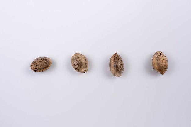 Закройте семена конопли, расположенные по прямой линии, изолированные на белом фоне. закройте семена конопли.