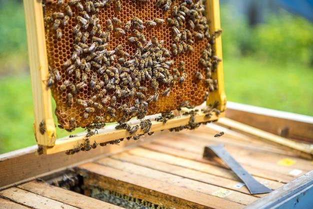 ミツバチで満たされたハニカムのクローズアップ
