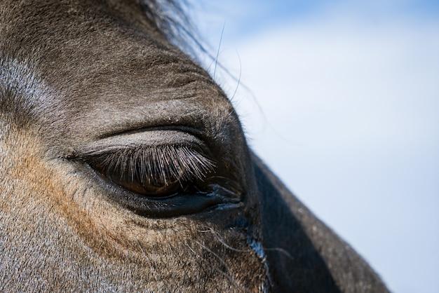 Крупный план глаз лошади на голубом небе