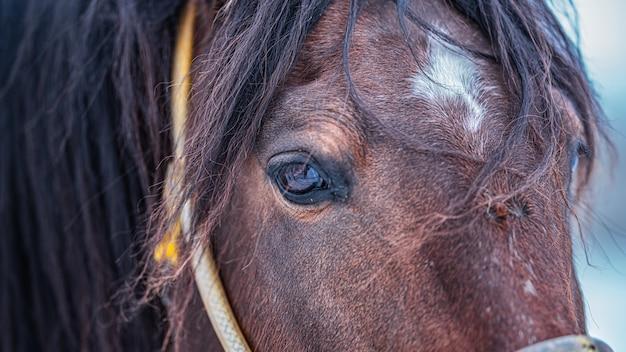 馬のクローズアップ