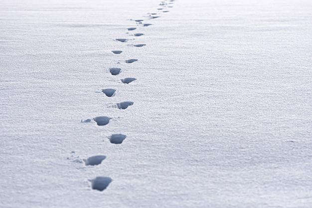 新鮮な白い雪の中の人間の足跡のクローズアップ