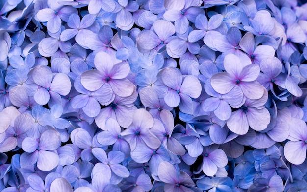 あじさいの花、朝の花のクローズアップ