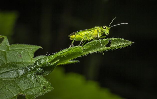 Крупным планом насекомых на зеленом листе