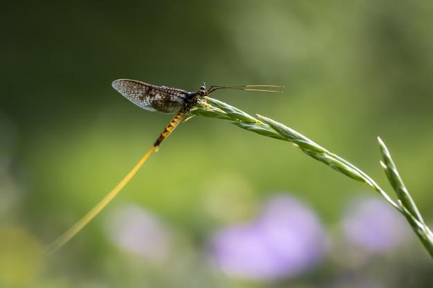 Крупным планом насекомое, сидящее на растении