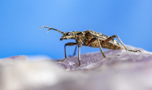 바위에 안테나와 곤충의 클로즈업
