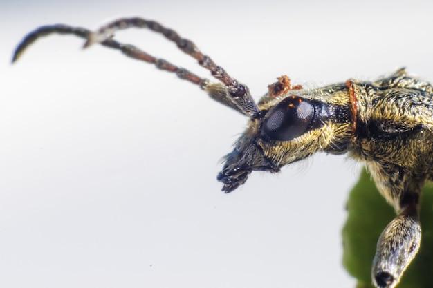 長いアンテナを持つ昆虫のクローズアップ