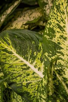 興味深い植物の葉のクローズアップ