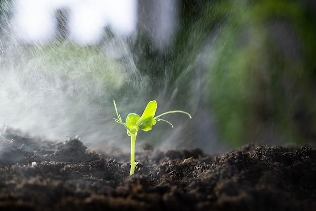 小さな緑の芽の灌漑のクローズアップ