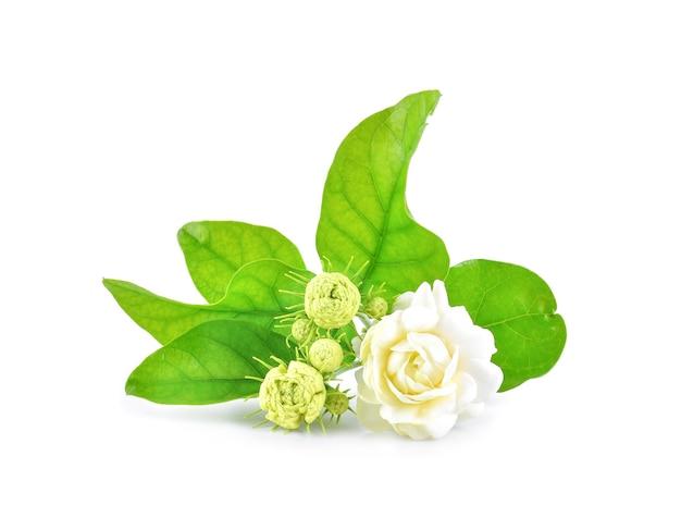 Крупный план цветов жасмина