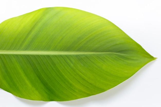 흰색 배경에 홈이 있는 큰 녹색 잎을 닫습니다.